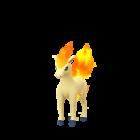 โพนีตะ - Normal - Pokémon GO