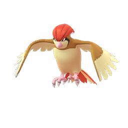 Pidgeotto - Male / Female