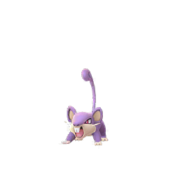 Rattata - Female