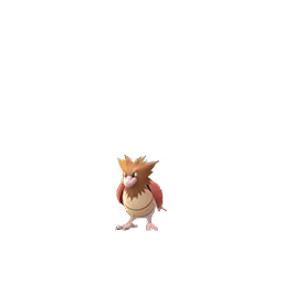 Spearow - Male / Female